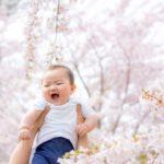 桜フォト🌸